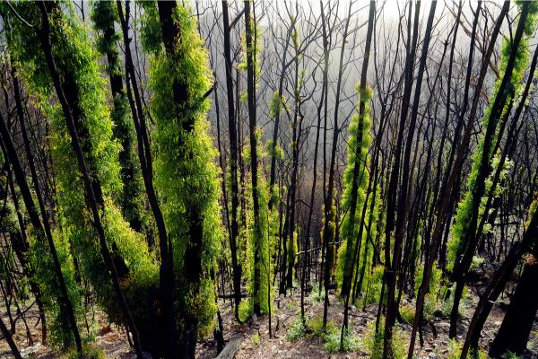 How Australia Is Recovering From Massive Bushfire Destruction?