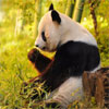 In Pursuit Of Pandas On Sale Price